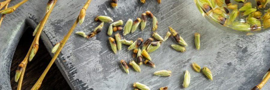 Formation gemmotherapie, améliorer son bien-être grâce aux plantes